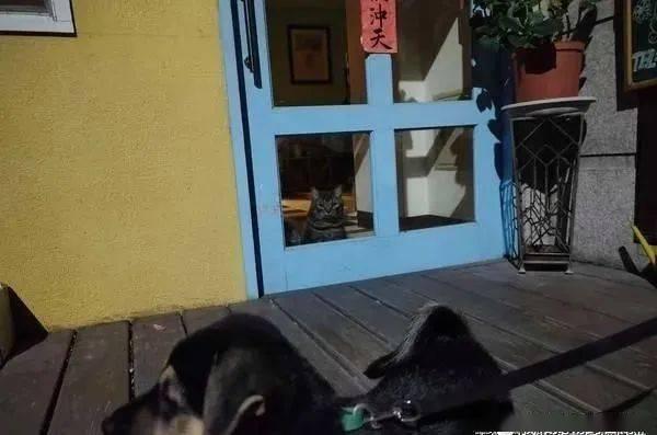 狗狗玩得太high,下秒却倒在草地上,无论怎么都叫不醒......