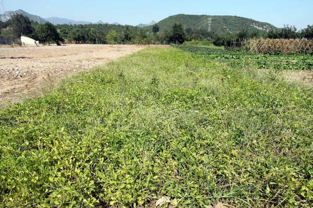 发现门头沟一个好去处!有山有水能摘蔬菜!土地认养一年才500多!