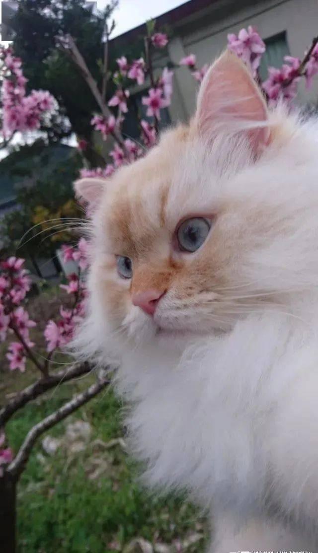 她在网上PO出与爱猫合照爆红,网友:这真的是猫吗?