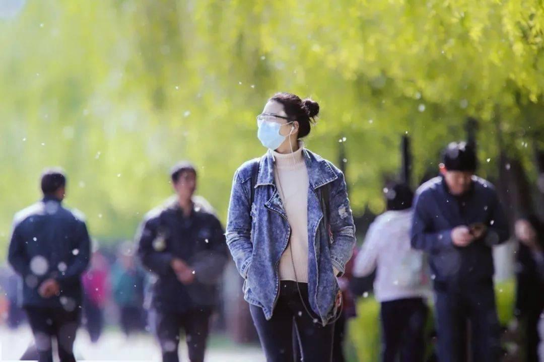 敏感人群注意!北京发布今年首个杨柳飞絮预报