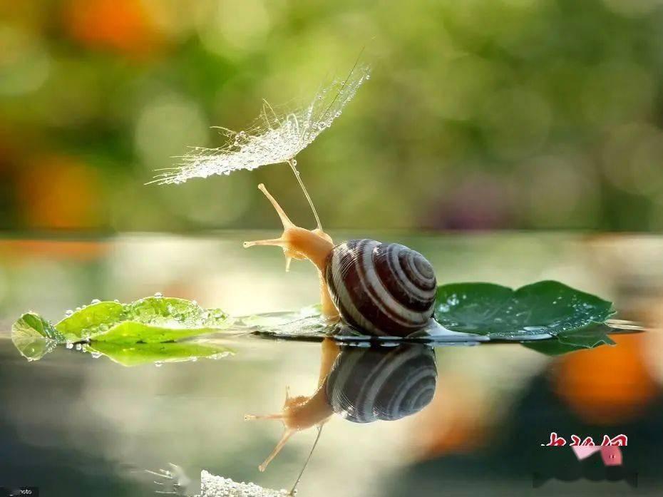 气象物候 小动物避雨有妙招萌到你了吗