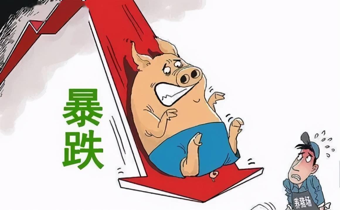 2021五一猪肉价格能涨多少?附今日全国最新猪价涨跌表一览