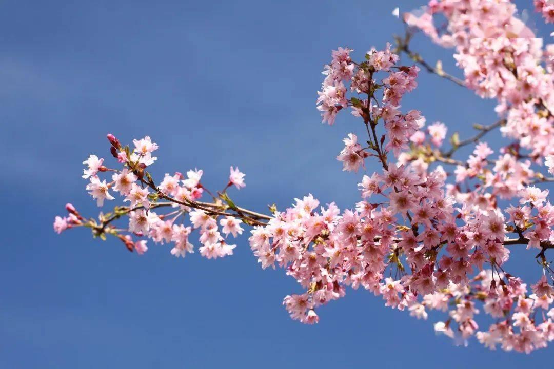五一去哪儿?黑龙江献上只属于春末夏初的北国风光~