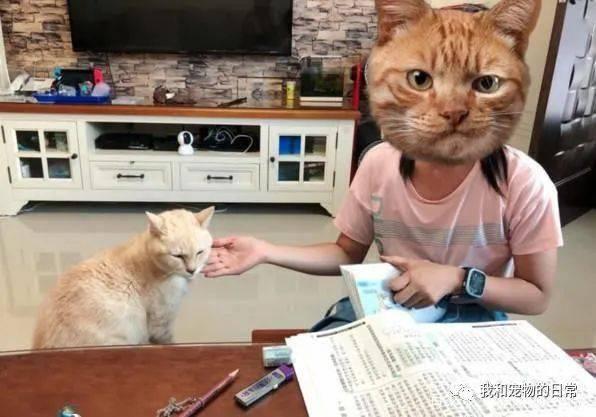 读书会耗体力,所以吸猫是必备的!网笑:主子加持一定过