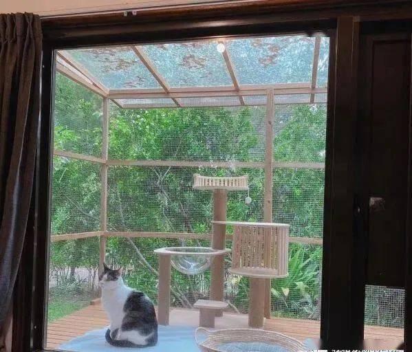 老爸为女儿爱猫打造豪华户外猫屋,轻松收买猫咪与女儿的心!