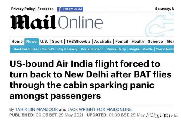 机舱里发现蝙蝠!一架客机紧急返航