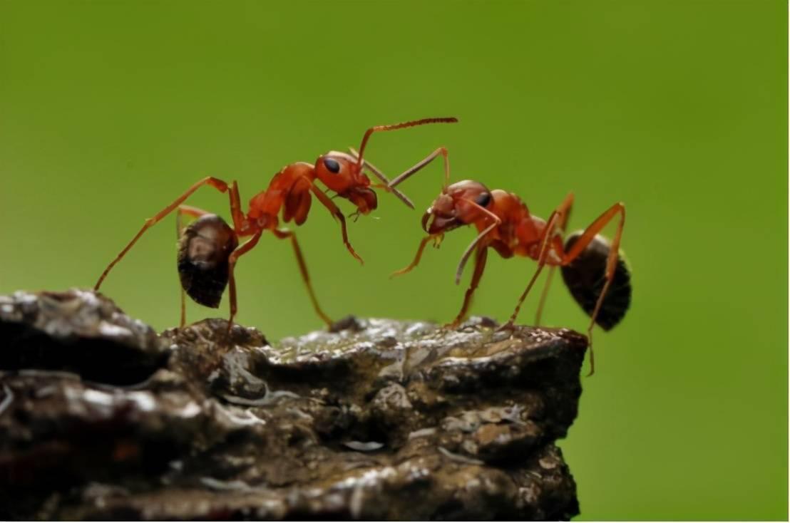 蚂蚁看点怎么看不到了 蚂蚁看点历史版本