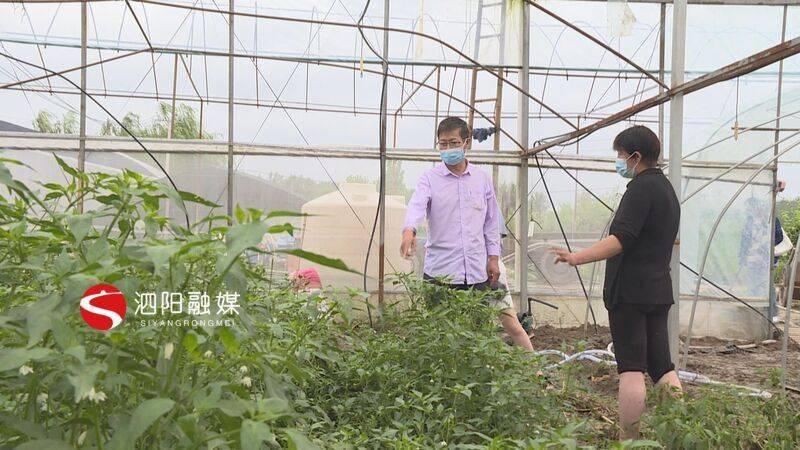 """泗阳:""""烟花""""让农作物""""很受伤""""农技专家下田头支招"""