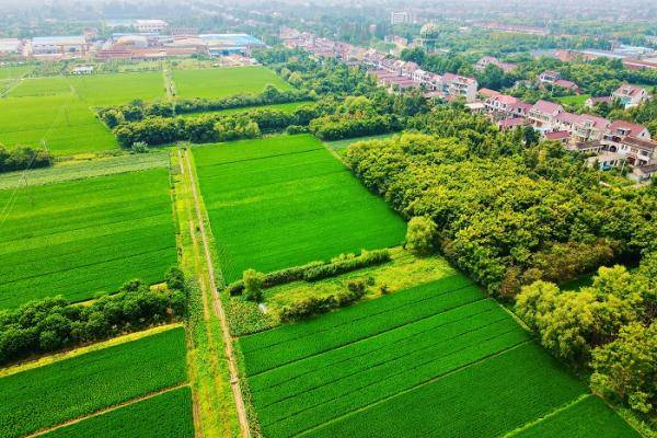 中国已建成8亿亩高标准农田