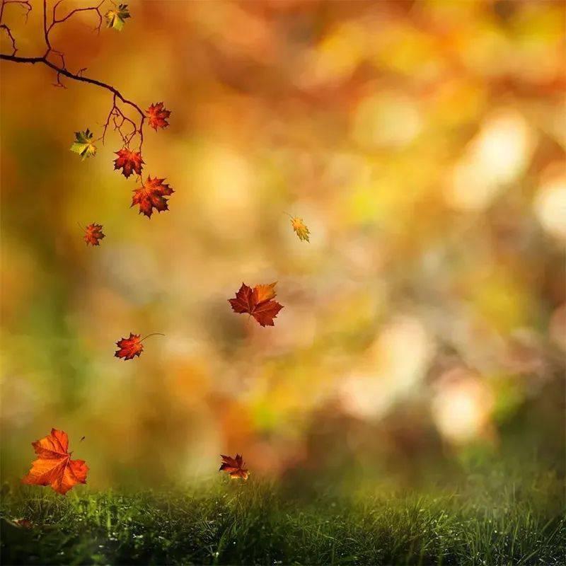 这一季秋,愿你安好,我亦无恙!